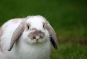 Kosmetyki nietestowane na zwierzętach i wegańskie – czy to synonimy?